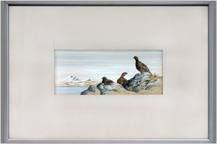 Campbell Gillies - Birds-