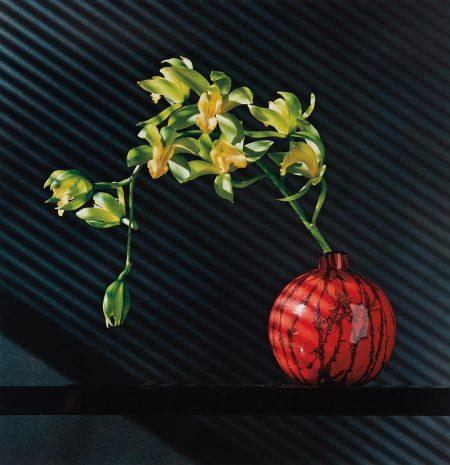 Robert Mapplethorpe-Orchids-1987