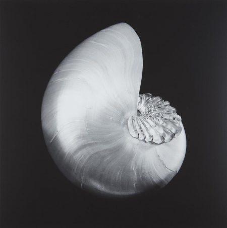 Robert Mapplethorpe-Shell And Crystal-1986