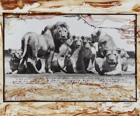 Peter Beard-Lion Pride At Ndutu/Southern Serengeti For The End Of The Game-1976