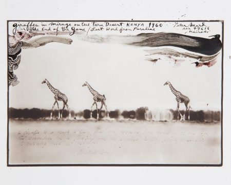 Peter Beard-Giraffes In Mirage On The Tara Desert Kenya For The End Of The Game/Last Word From Paradise-1960