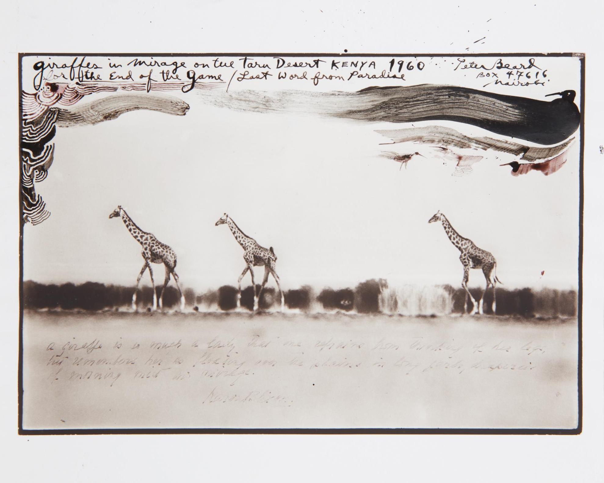 Peter Beard-Giraffes In Mirage On The Tara Desert Kenya For The End Of The Game/Last Word From Paradise-1960