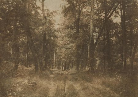 Gustave Le Gray-Sous-Bois Au Bas-Breau, Foret De Fontainebleau-1852
