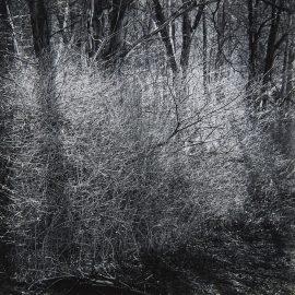 Ralph Steiner-Untitled-1960