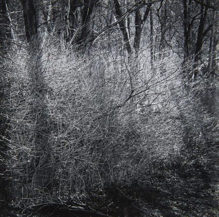 Ralph Steiner - Untitled-1960