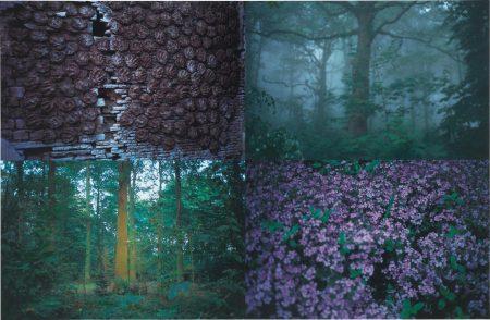 Gabriel Orozco-Follaje (Foliage)-1997