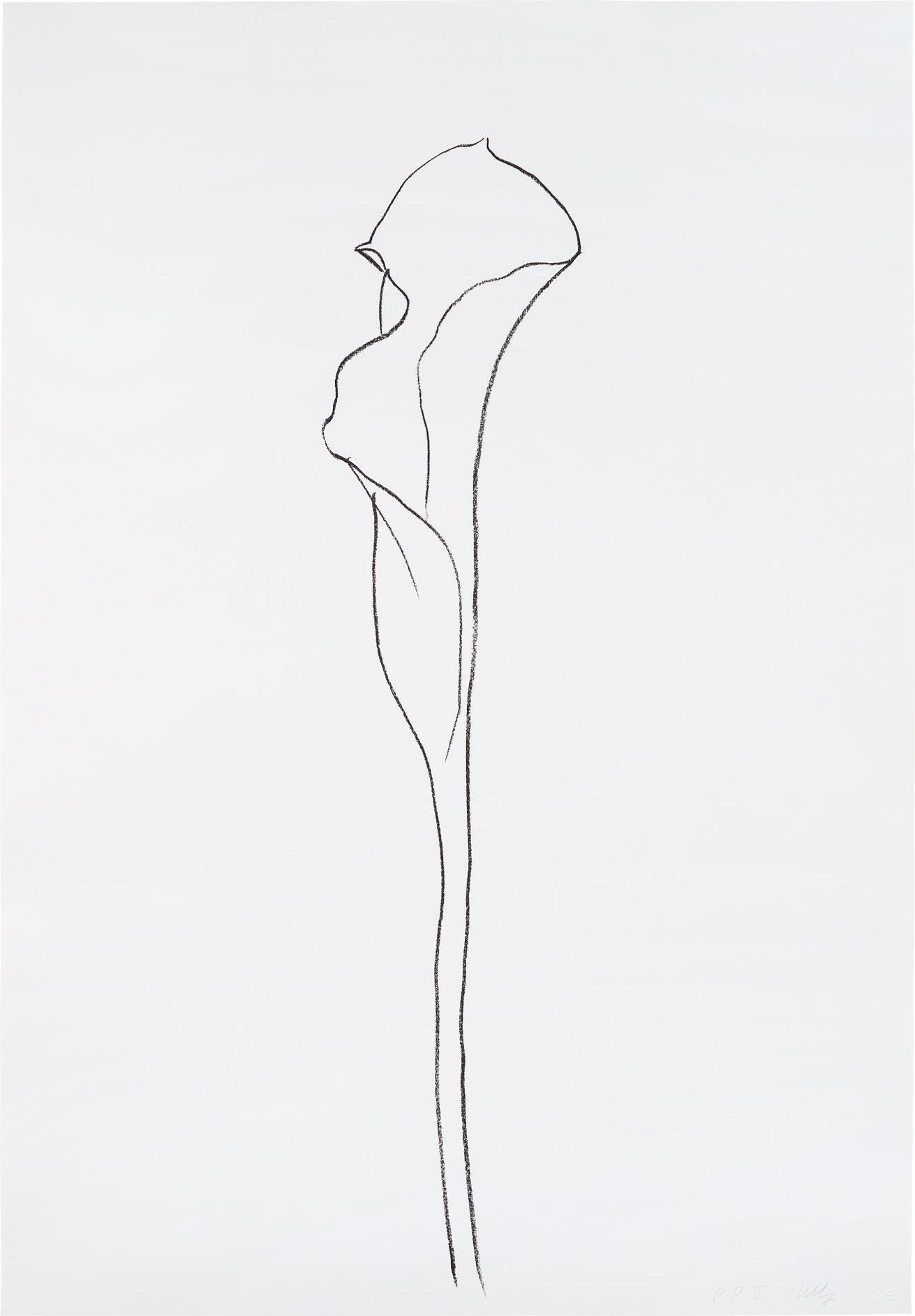 Ellsworth Kelly-Calla Lily III, From Series Of Plant And Flower Lithographs-1985