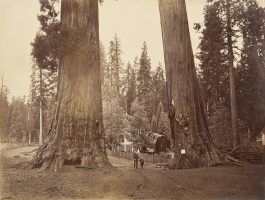 Carleton E. Watkins-Section Of The Sentinels With Pavilion Built Over The Stump Of The Big Tree, Calaveras Grove-1881