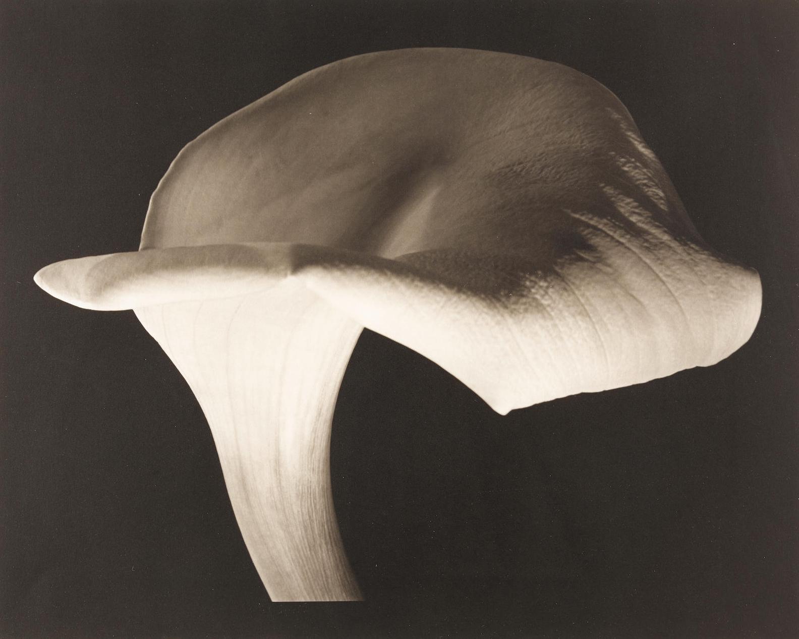 Horst P. Horst-Calla Lily-1944