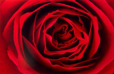 Ernst Haas-Red Rose-1970