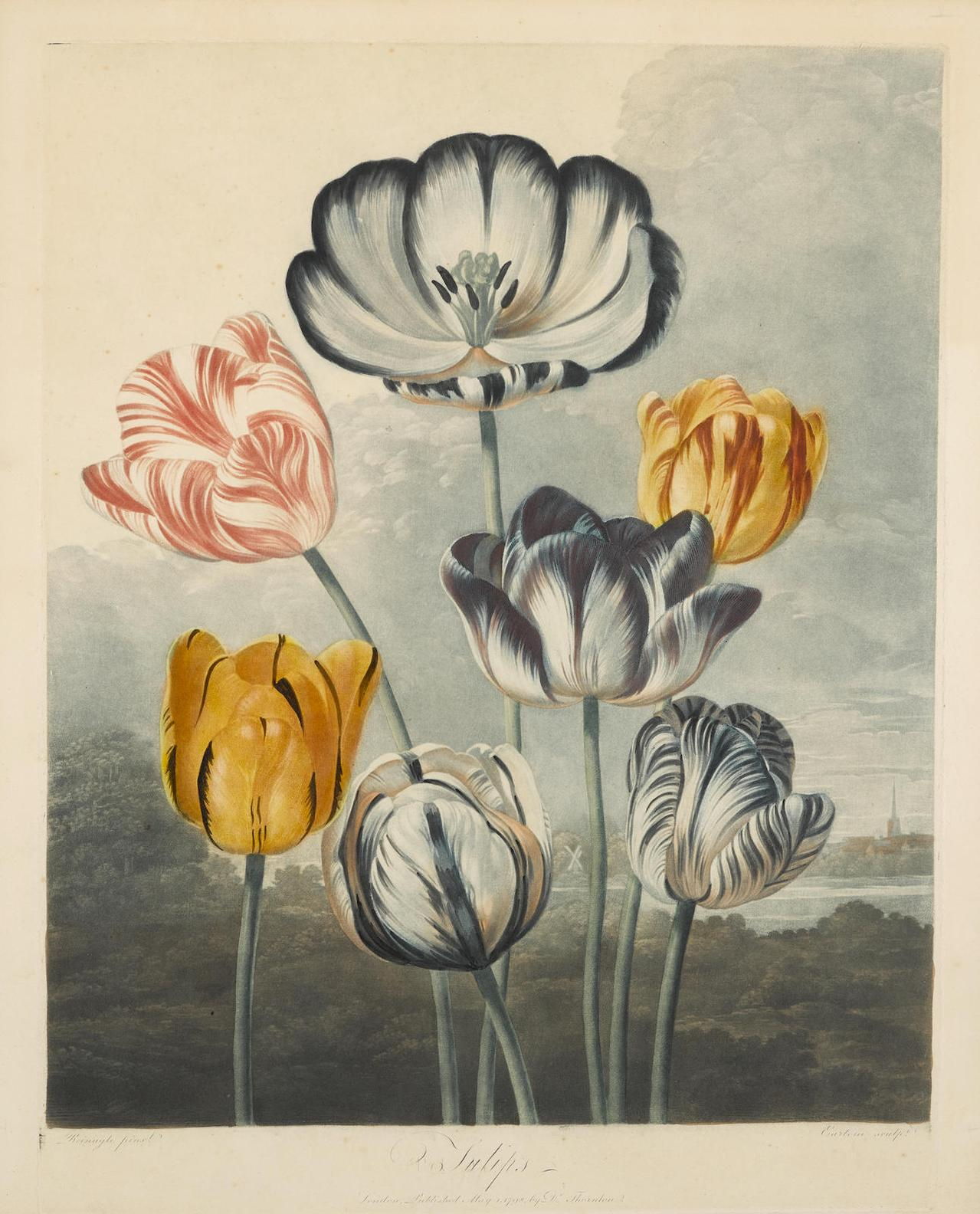 Dr Robert John Thornton-Tulips, Pl. X; Pontic Rhododendron, Pl. XXV, From Temple Of Flora 2-1807
