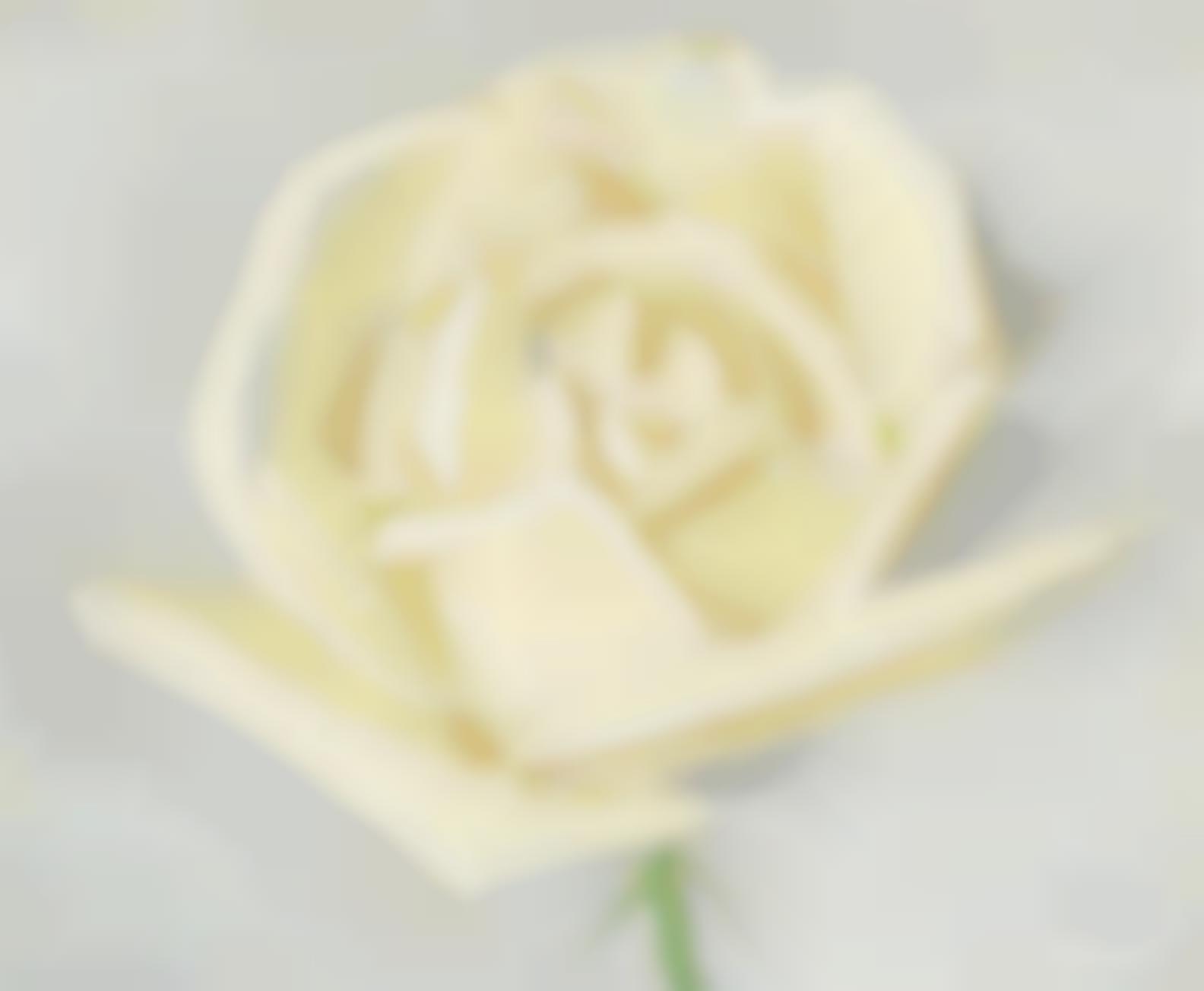 Alex Katz-A Rose-