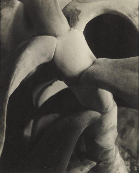 Imogen Cunningham-Cotyledon-1920