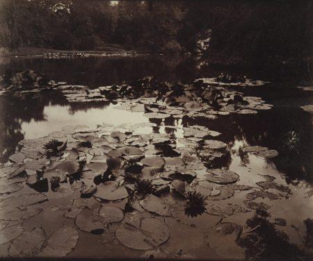 Eugene Atget-Nymphea-1910