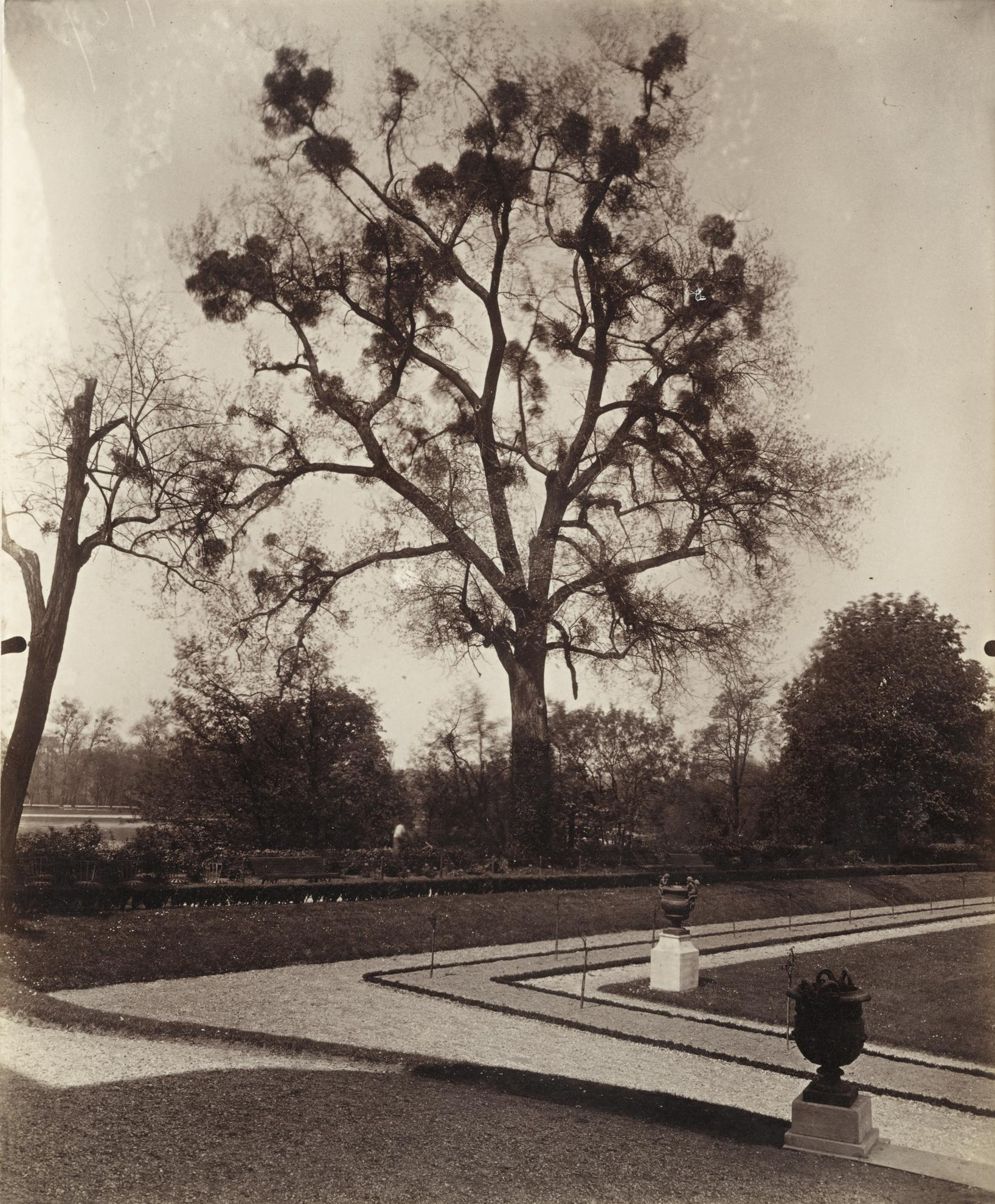 Eugene Atget-Arbre Avec Gui Mistletoe-1921