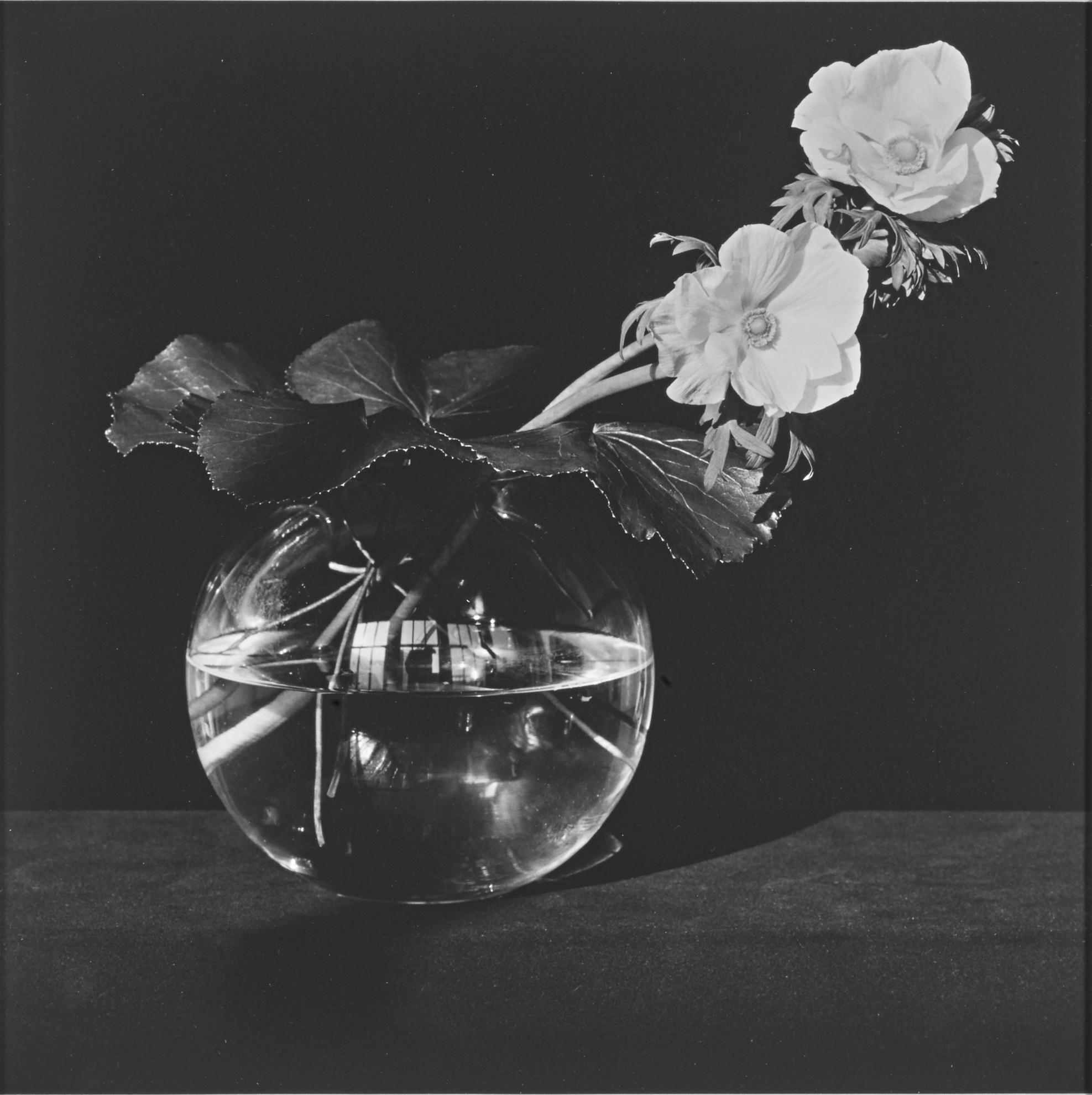 Robert Mapplethorpe-Anemone-1982