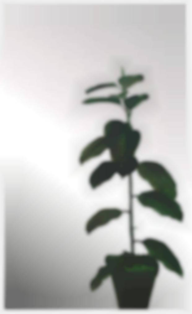 Michelangelo Pistoletto-Ficus-1965