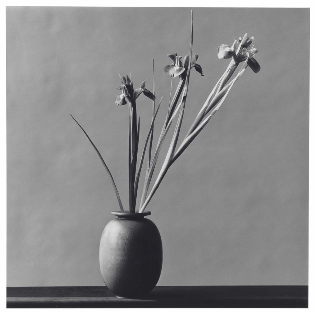 Robert Mapplethorpe-Iris-1982