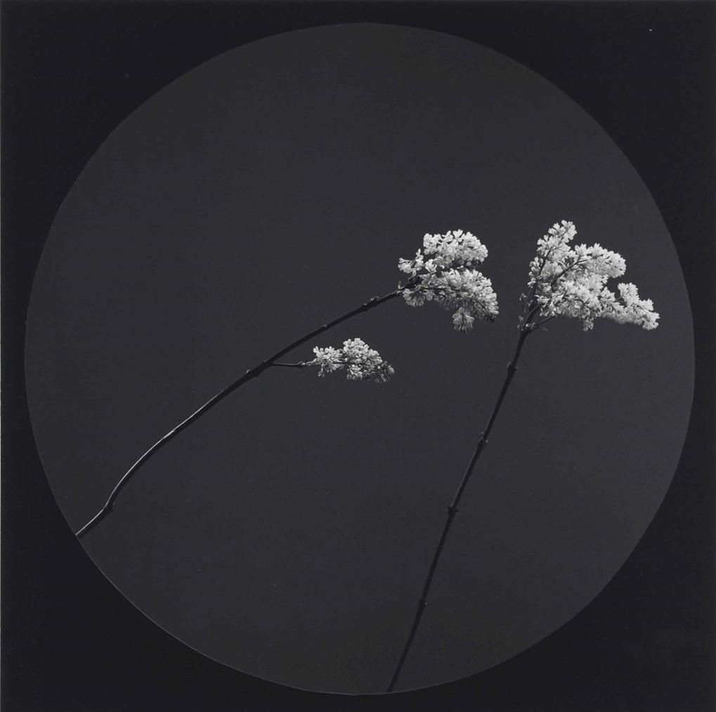 Robert Mapplethorpe-Flower-1984