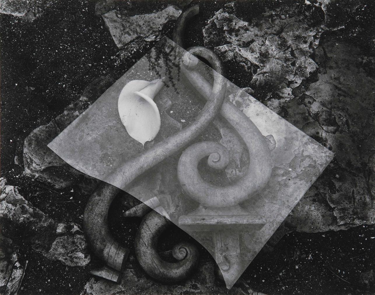 Edward Weston-Glass And Lily-1939