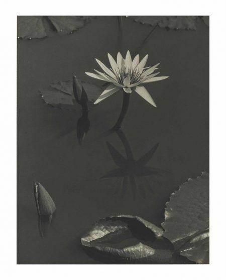 Charles Sheeler-The Lily, Mt. Kisco-1919