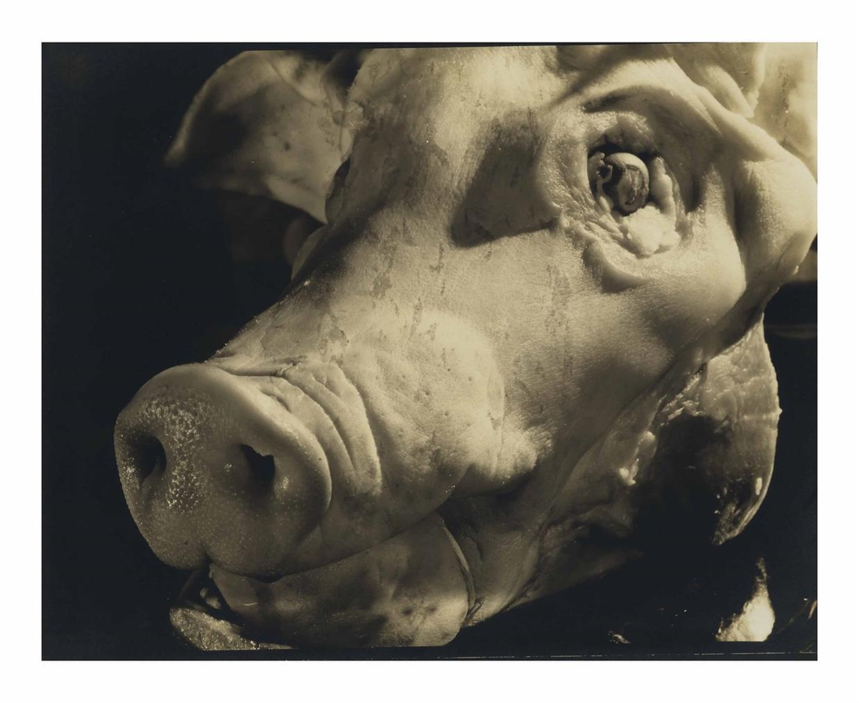 M.F. Agha - Untitled (Pigs Head)-1930