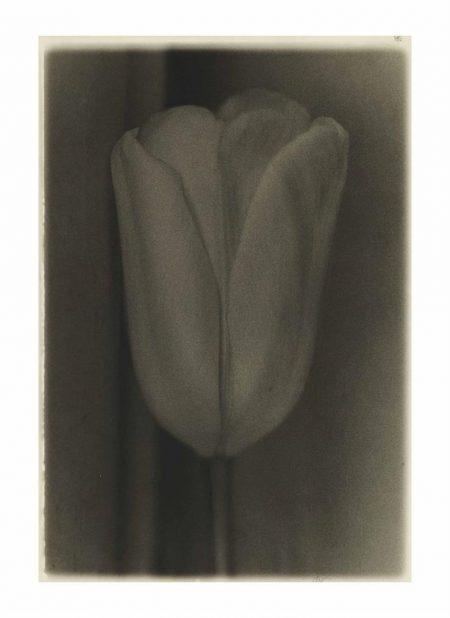 Sheila Metzner-Tulip-1978