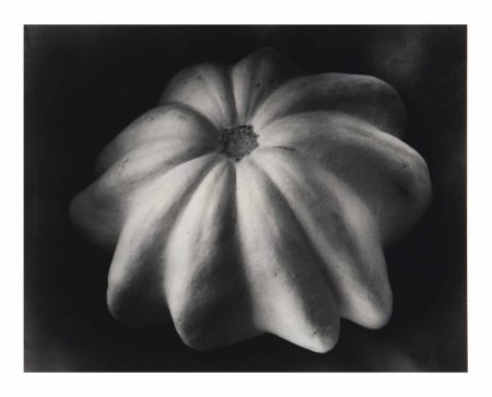 Edward Weston-Winter Squash-1930