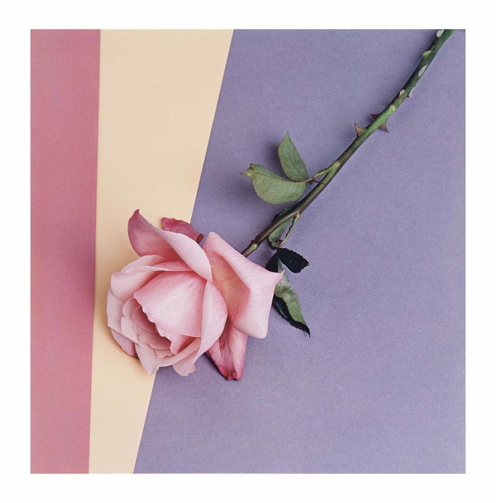 Robert Mapplethorpe-Rose-1987