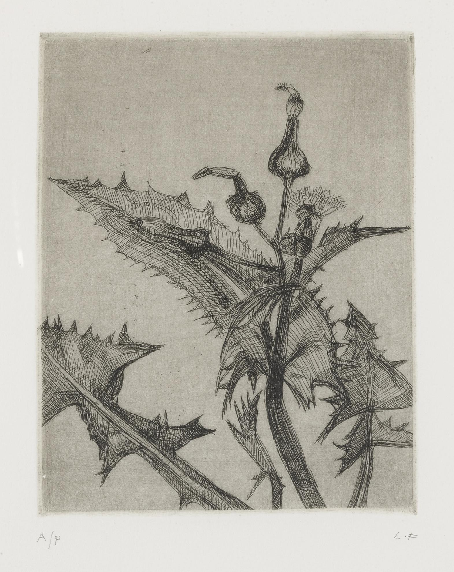 Lucian Freud-Thistle (H. 23)-1985