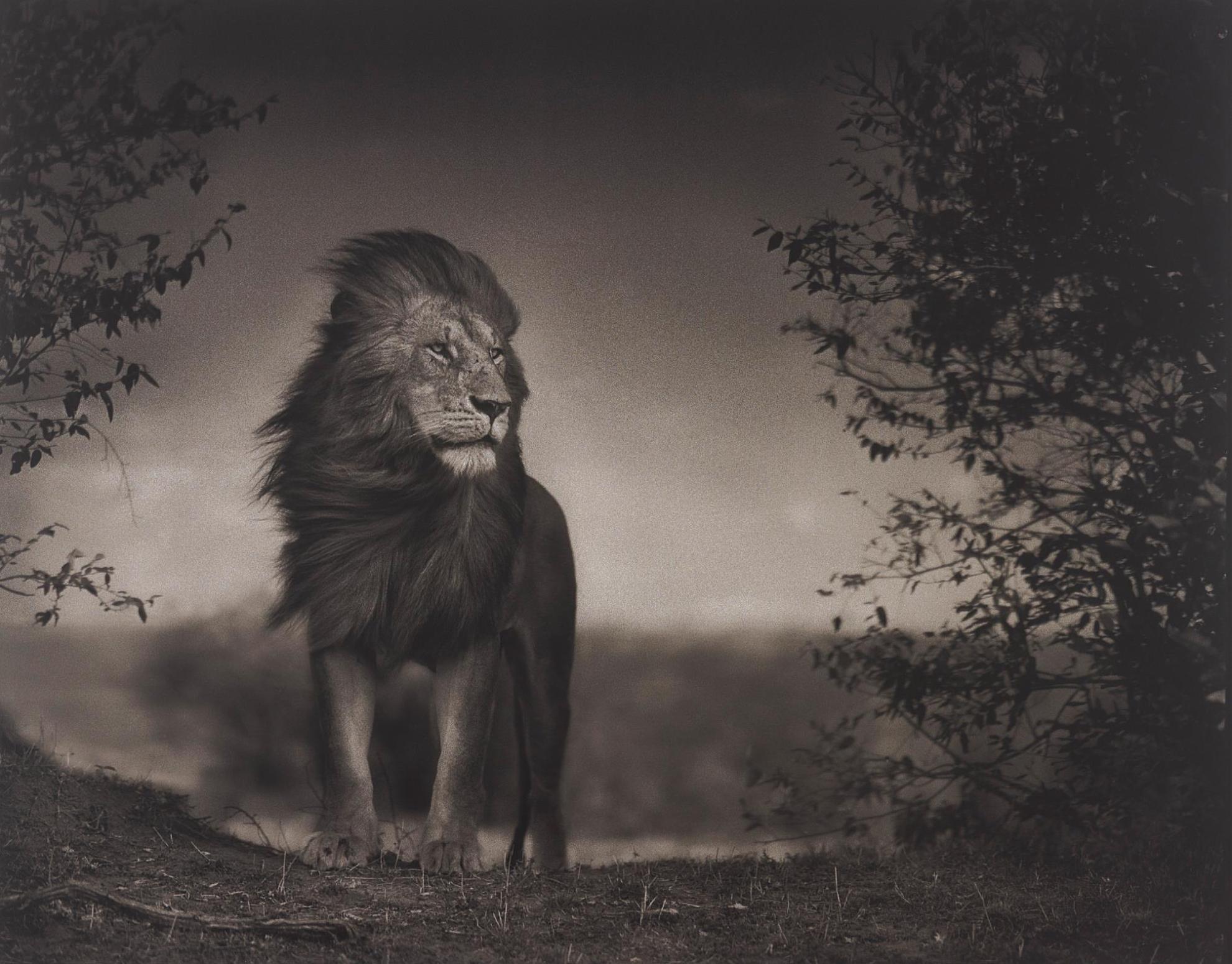 Nick Brandt-Lion Before Storm I, Maasai Mara-2006