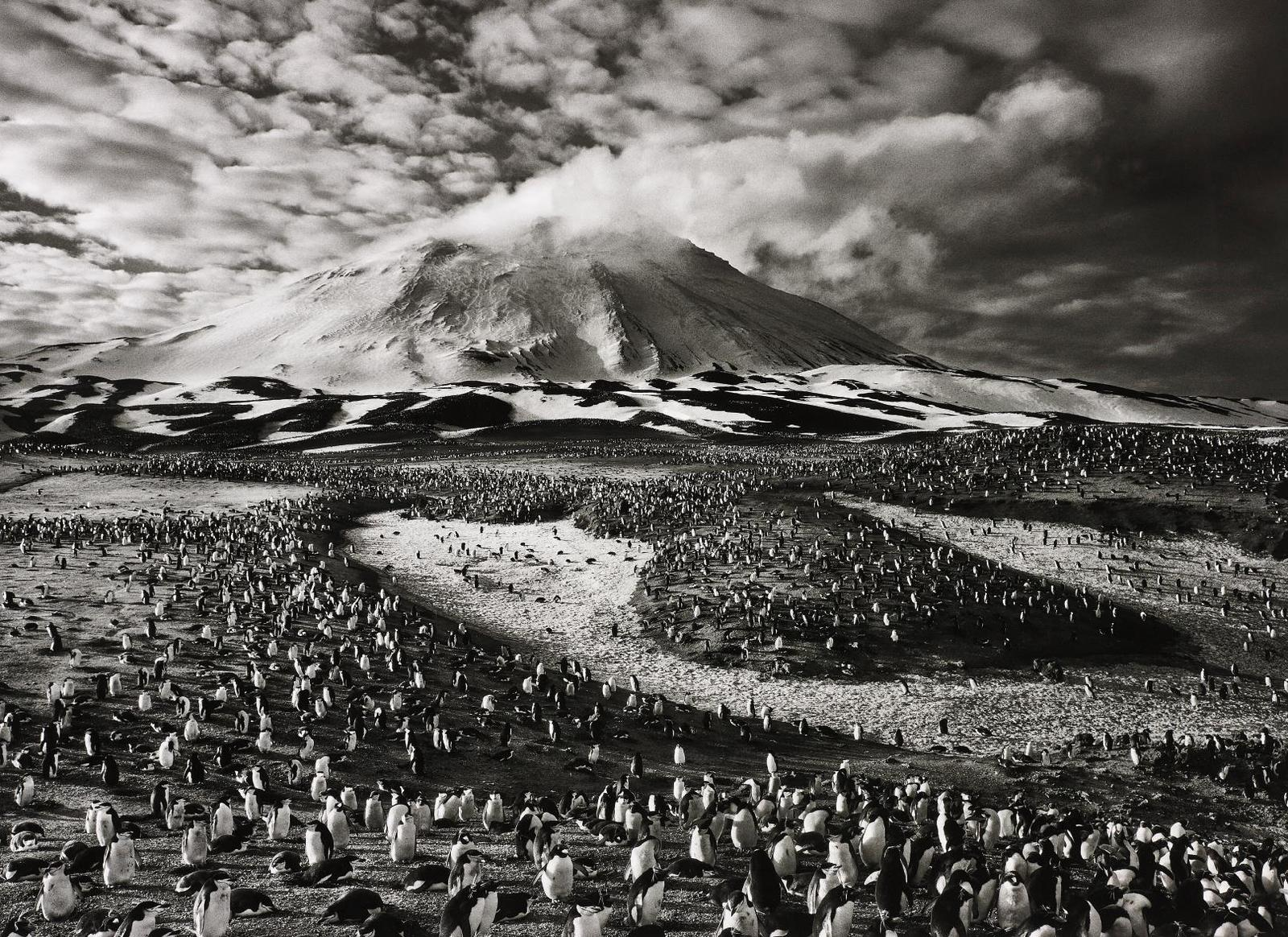 Sebastiao Salgado-Macaroni Penguins In Zavodovski Island, The Sandwich Islands-2009