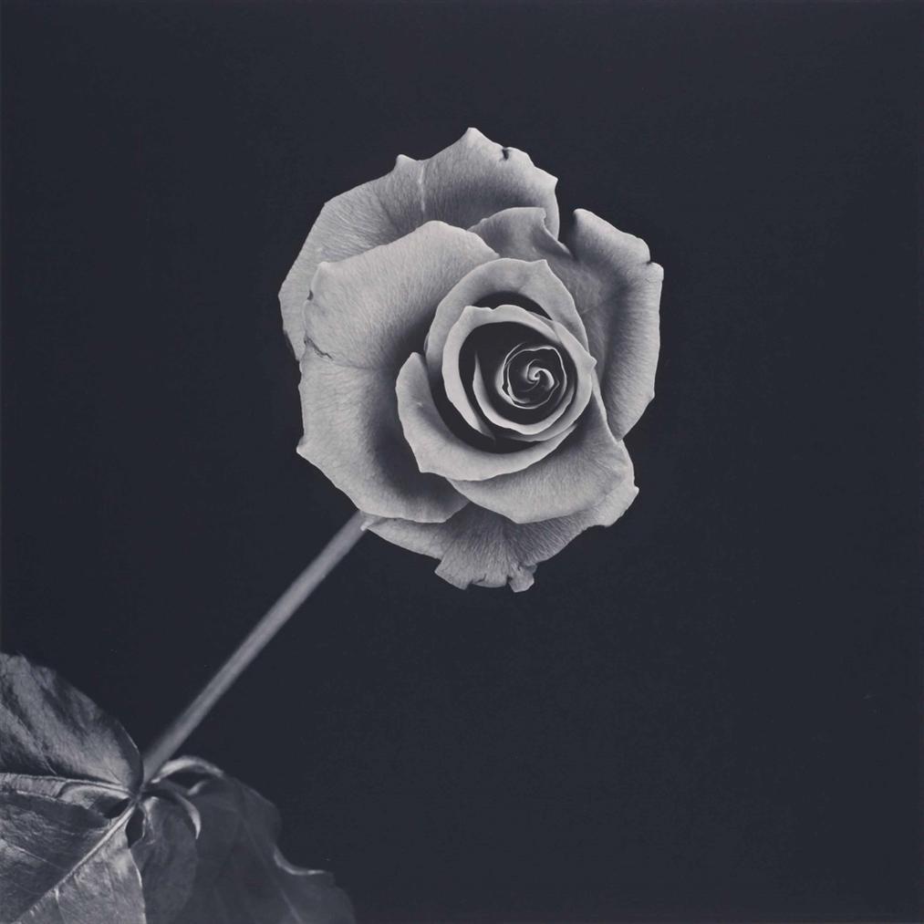 Robert Mapplethorpe-Rose-1989
