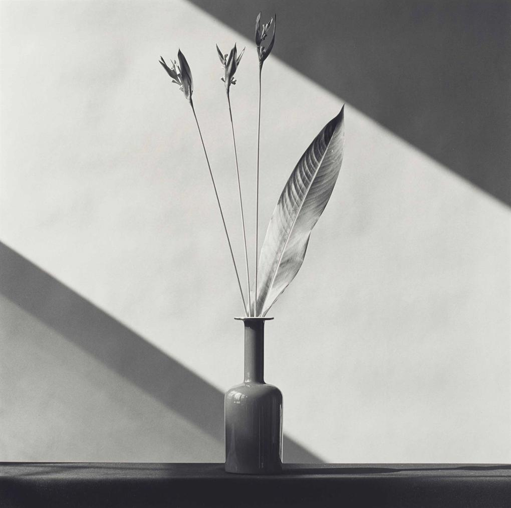 Robert Mapplethorpe  - Flower-1982