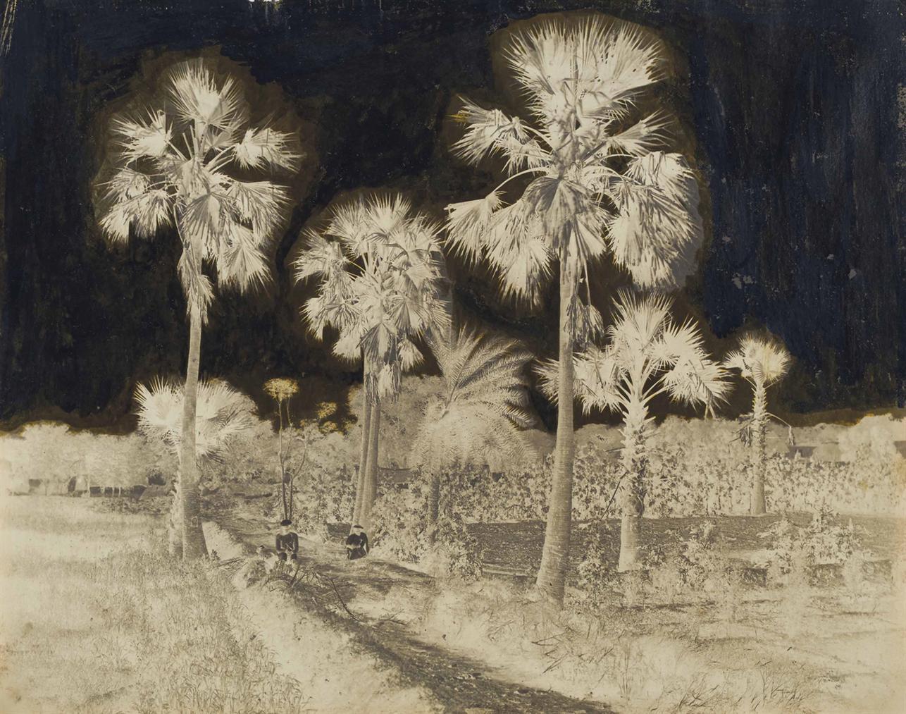 John Murray-Palm Trees Near Taj Mahal-1864