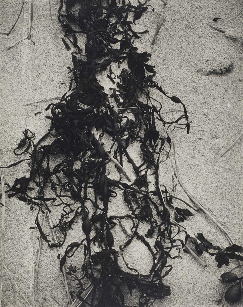 Paul Strand-Kelp-Varech, New England-1945