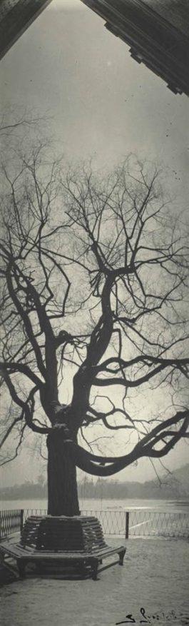 Josef Sudek-Sans Titre, Etude Darbre-1960