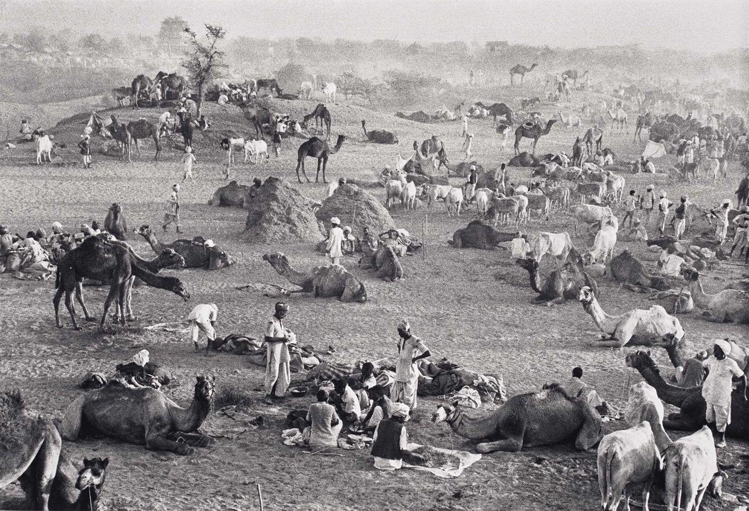 Marc Riboud-Marche Aux Chameaux, Rajasthan, Inde-1956