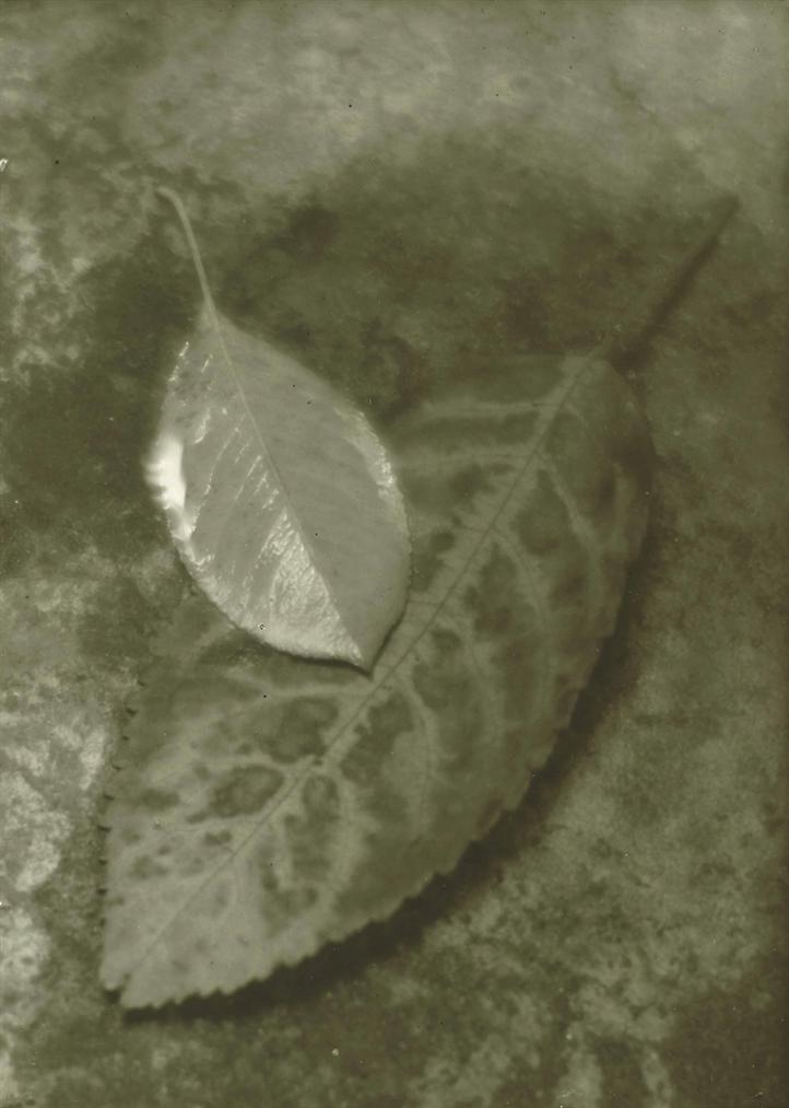 Josef Sudek-The Coming Of Autumn-1932