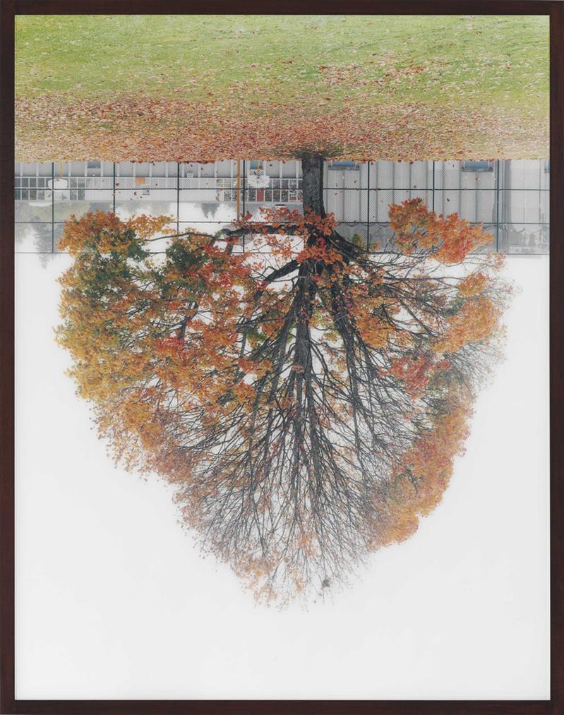 Rodney Graham-Schoolyard Tree, Vancouver-2001