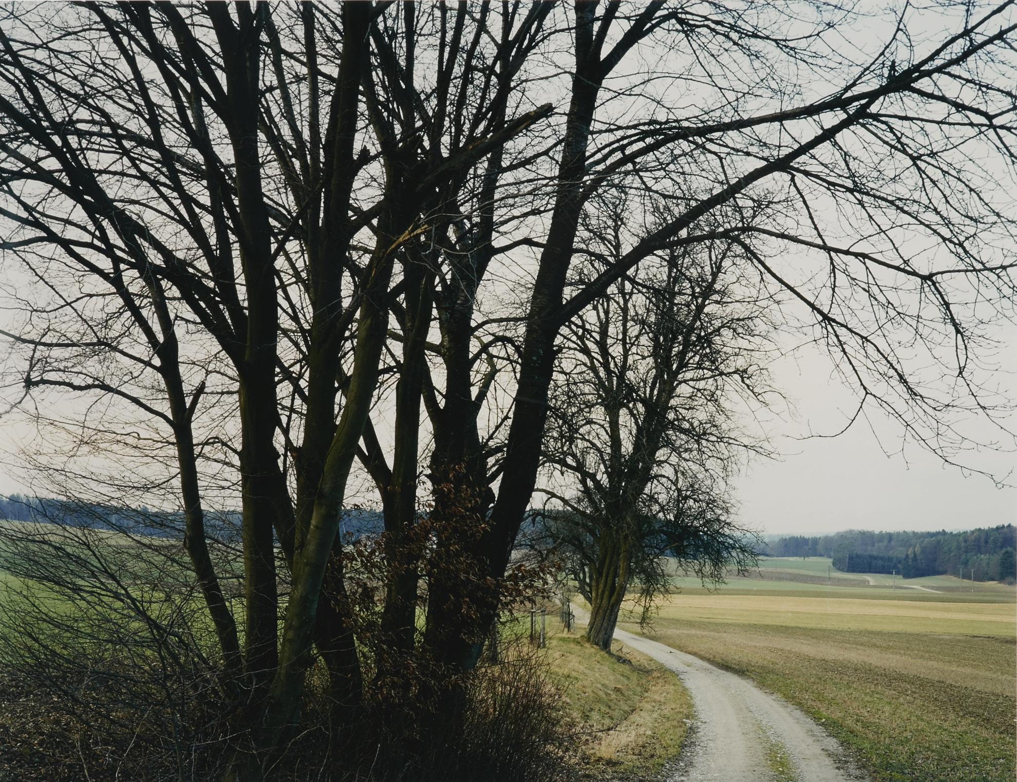 Thomas Struth-Baumgruppe Bei Rutschwil No. 25, Winterthur-1993