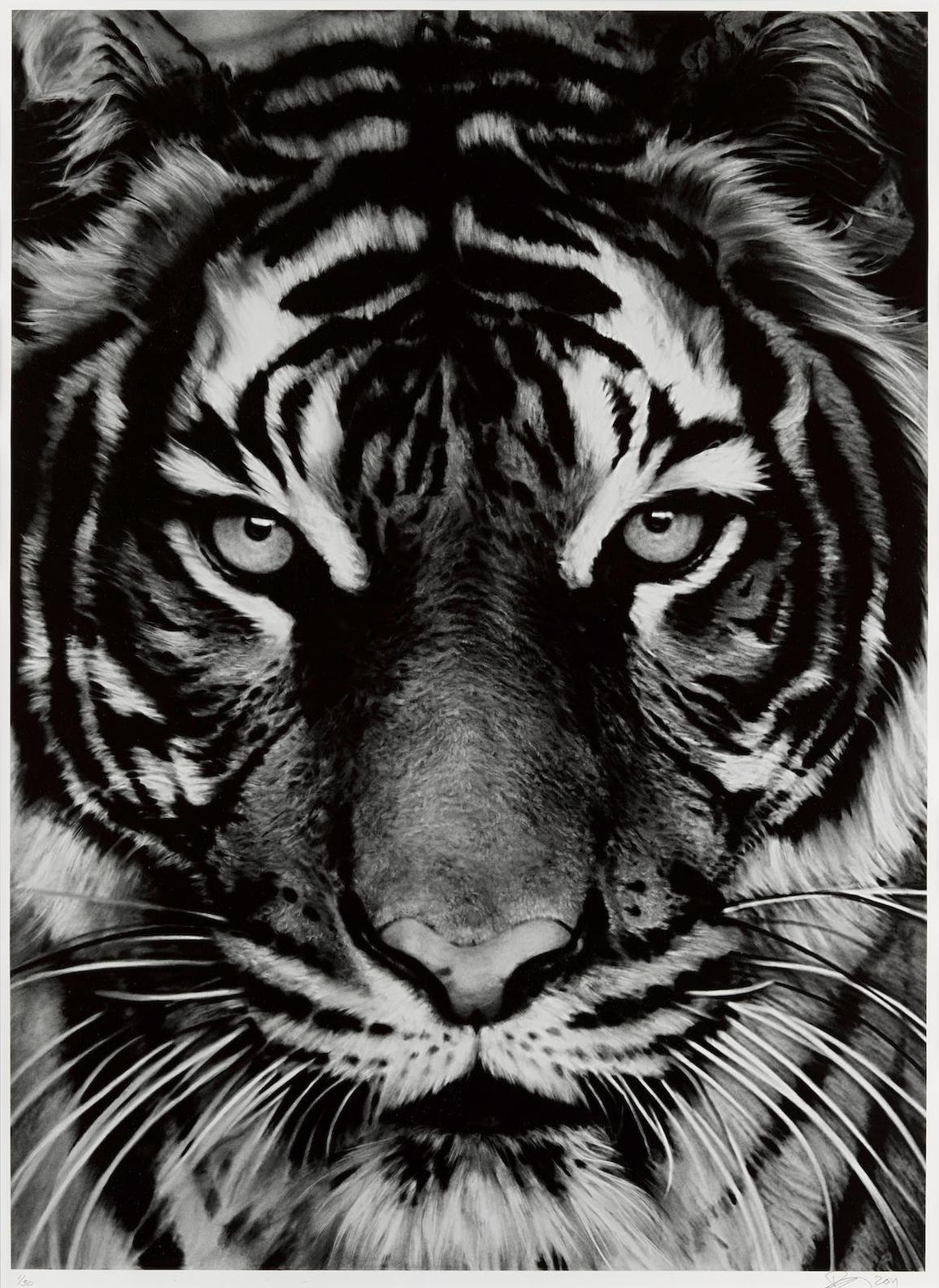 Robert Longo-Untitled (Tiger Head 2)-2011
