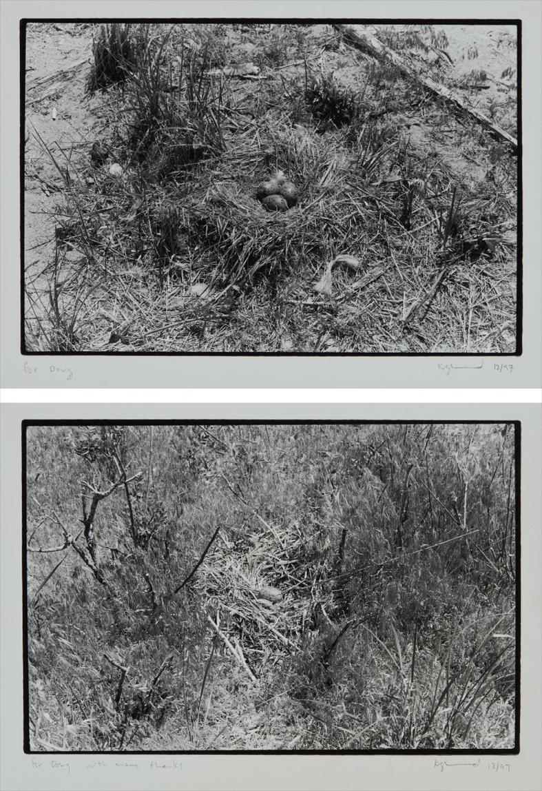 Zoe Leonard-Two works: (i) Nest no. 1; (ii) Nest-1997