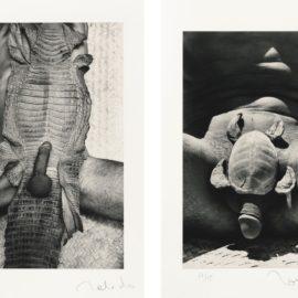 Francisco Toledo-Mues Immobiles-1997