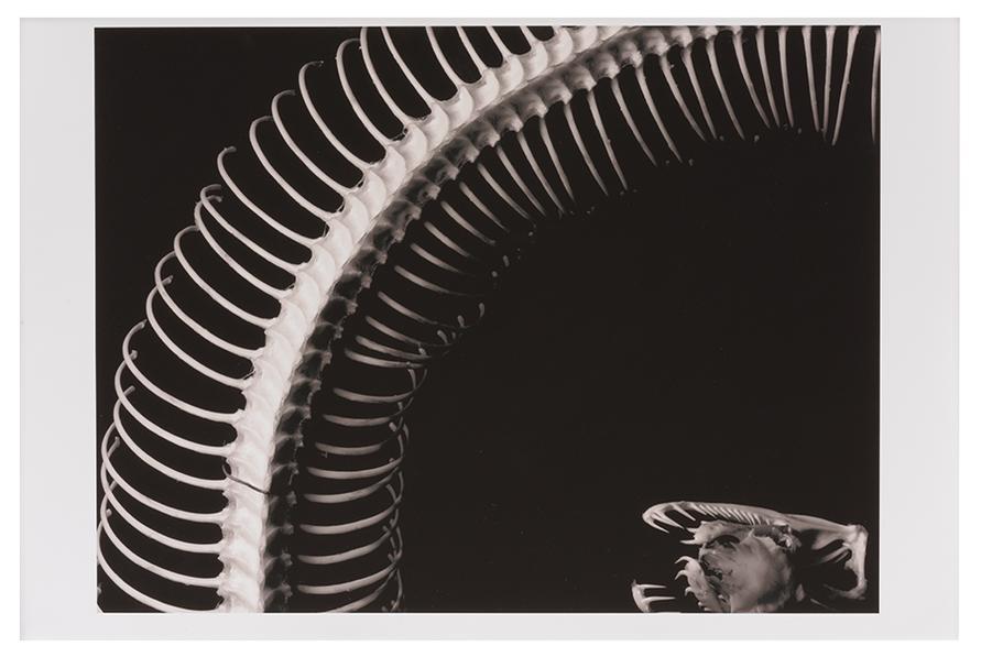 Georges Rado - Espinhas (Spines)-1960