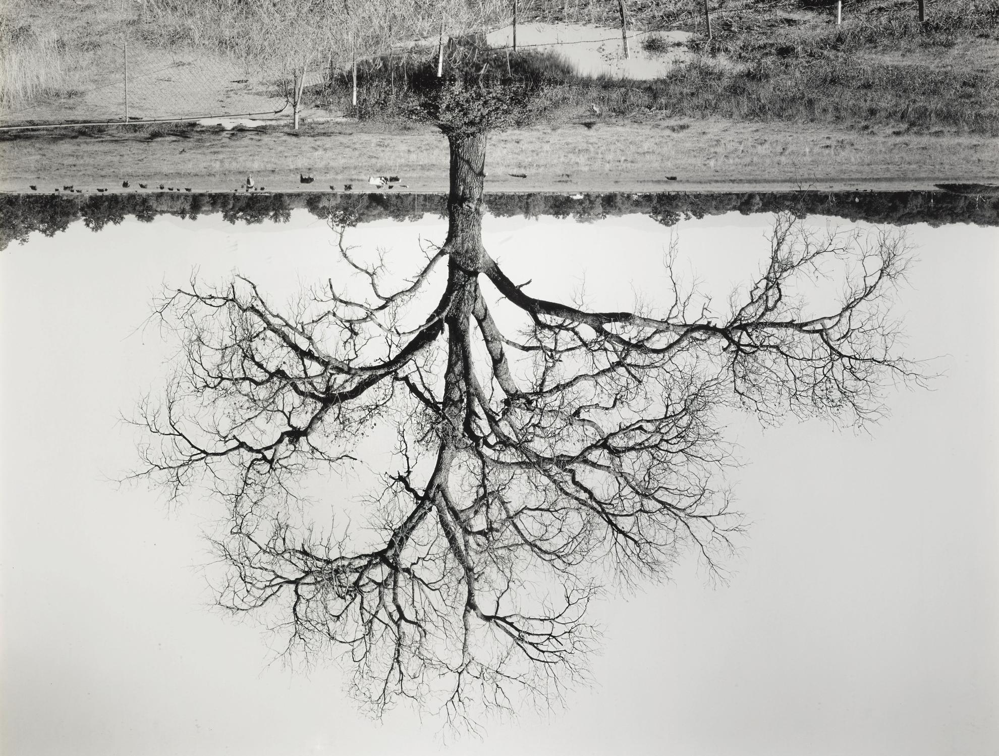 Rodney Graham-Oak Trees, Red Bluff (2)-1993