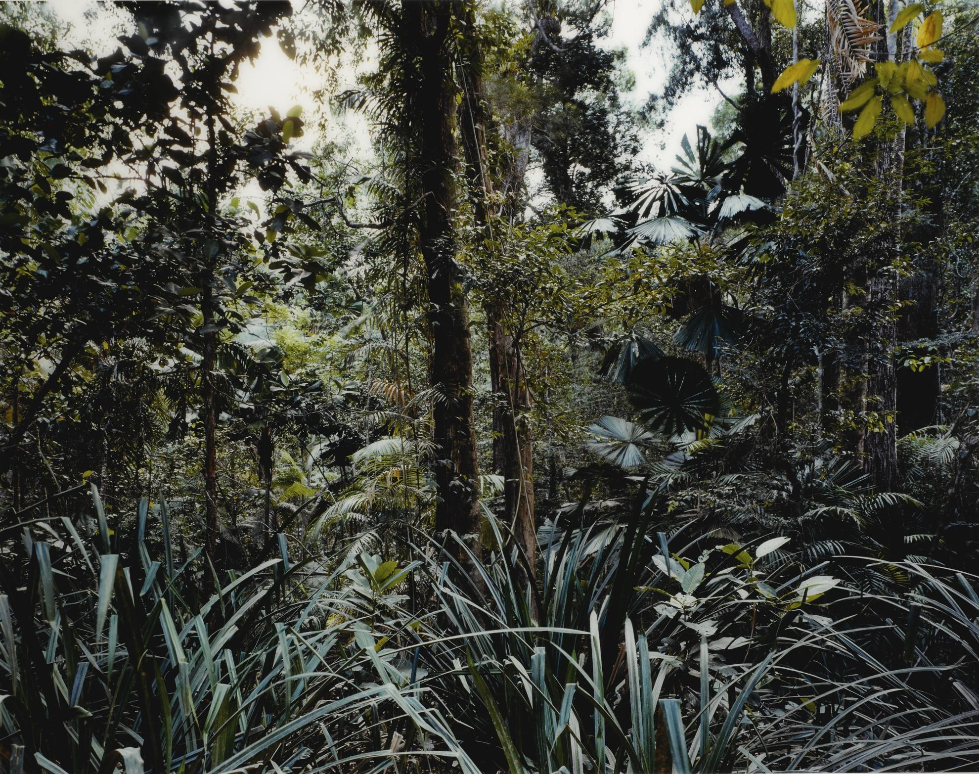 Thomas Struth-Paradise 7, Daintree, Australia-1998