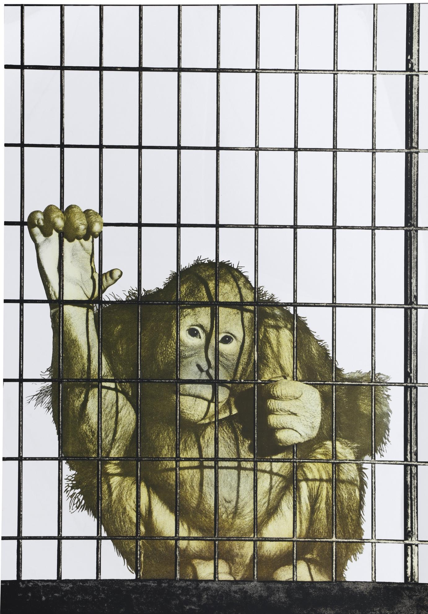 Michelangelo Pistoletto-Scimmia In Gabbia-1973