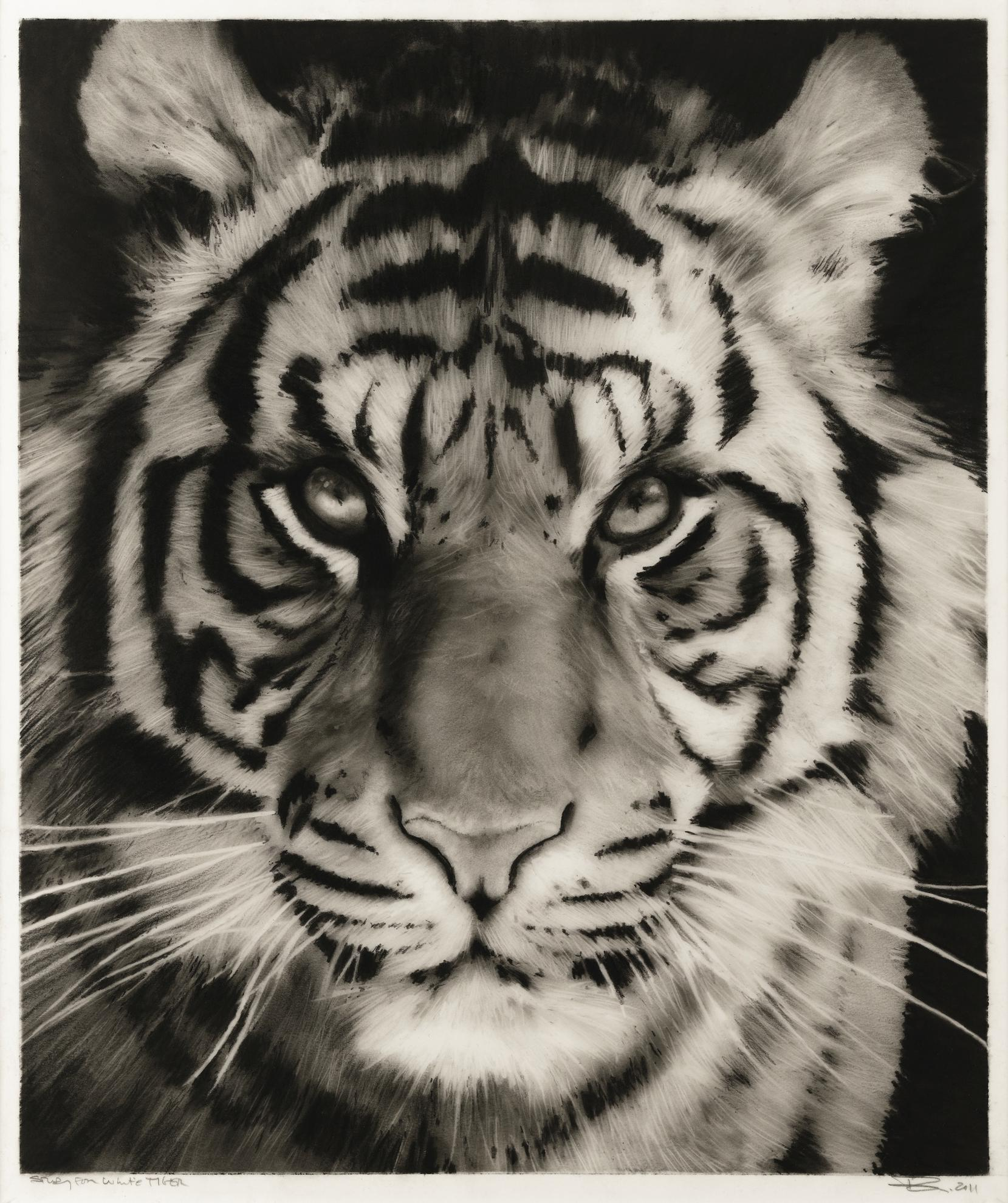 Robert Longo-Study For White Tiger-2011