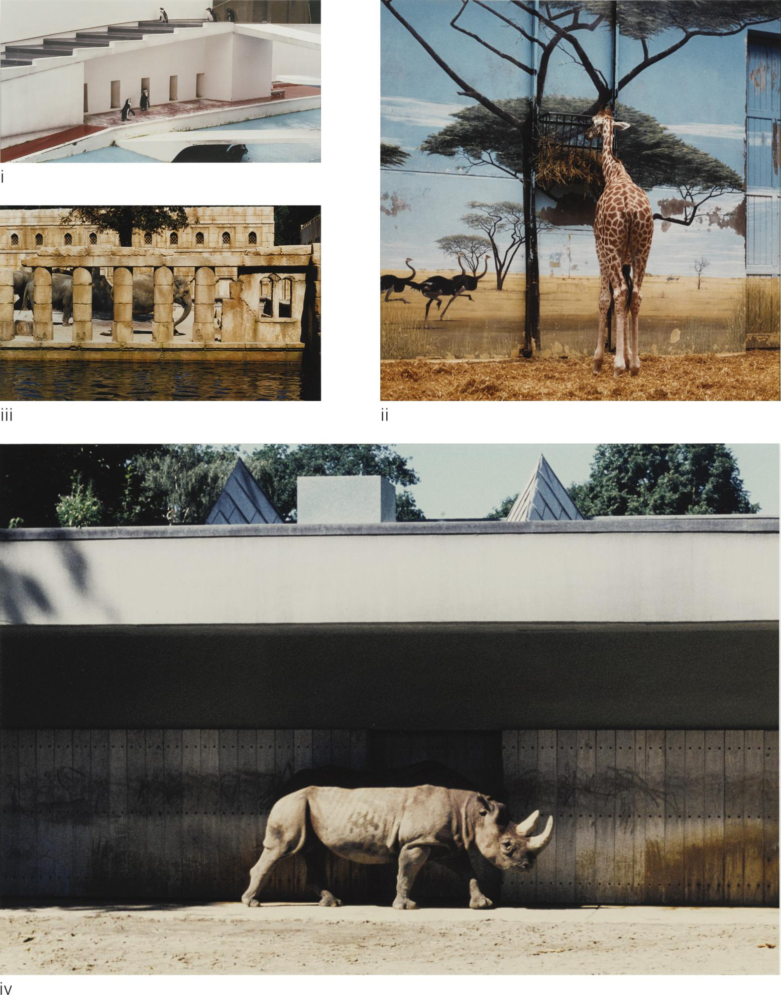 Candida Hofer-(i) Zoologischer Garten London V (ii) Zoologischer Garten Paris I; (iii) Zoologischer Garten Hanover III (iv) Zoologischer Garten Hanover IV-1997